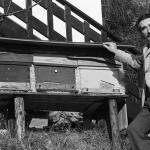 Con le arnie delle api