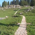 Giardino botanico alpino del monte Corno a Lusiana