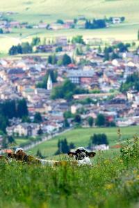 Veduta di Asiago dai pascoli (foto: Roberto Costa Ebech).